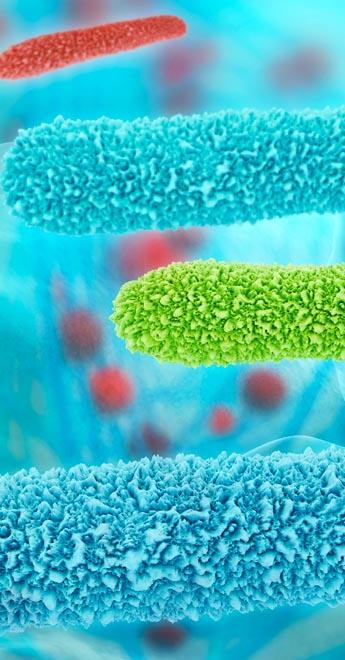 batteri nell'acqua